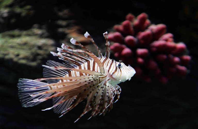 Scientists Search for Venomous Fish With Brash Spines Found Off UK Coast